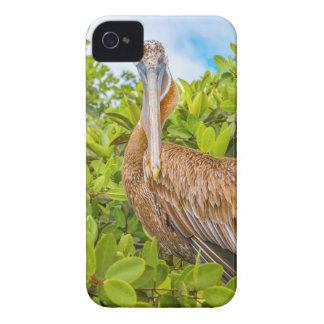 Big Pelican at Tree, Galapagos, Ecuador iPhone 4 Case