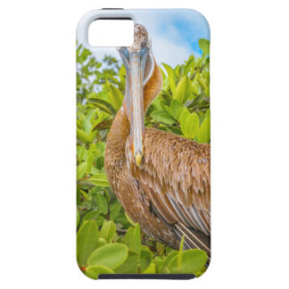 Big Pelican at Tree, Galapagos, Ecuador iPhone 5 Case