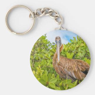 Big Pelican at Tree, Galapagos, Ecuador Keychain