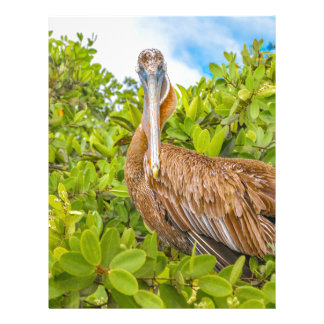Big Pelican at Tree, Galapagos, Ecuador Letterhead