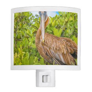 Big Pelican at Tree, Galapagos, Ecuador Nite Lite
