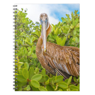 Big Pelican at Tree, Galapagos, Ecuador Notebook