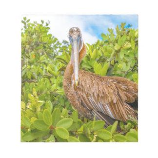 Big Pelican at Tree, Galapagos, Ecuador Notepad