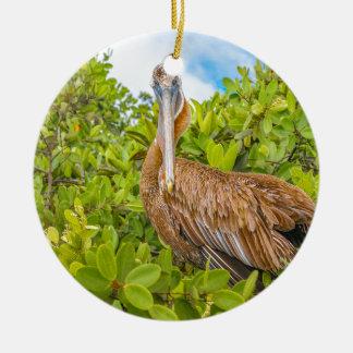 Big Pelican at Tree, Galapagos, Ecuador Round Ceramic Ornament