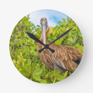 Big Pelican at Tree, Galapagos, Ecuador Round Clock