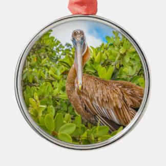 Big Pelican at Tree, Galapagos, Ecuador Silver-Colored Round Ornament