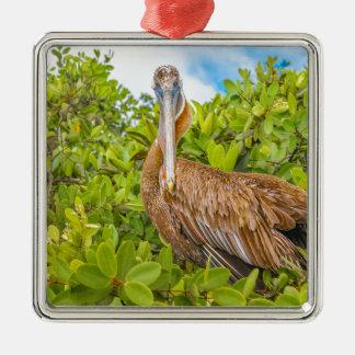 Big Pelican at Tree, Galapagos, Ecuador Silver-Colored Square Ornament