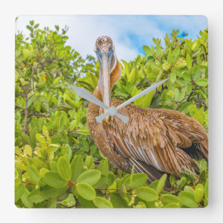 Big Pelican at Tree, Galapagos, Ecuador Square Wall Clock