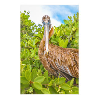Big Pelican at Tree, Galapagos, Ecuador Stationery