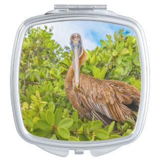 Big Pelican at Tree, Galapagos, Ecuador Vanity Mirror