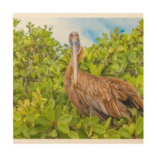 Big Pelican at Tree, Galapagos, Ecuador Wood Print