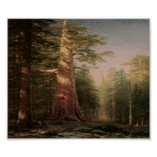 Big Pine Tree Vintage Art Print Poster
