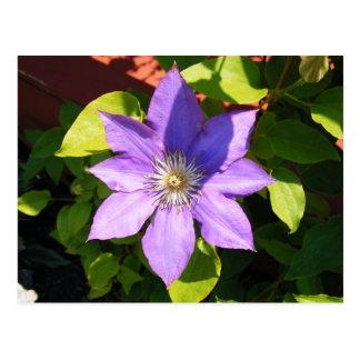 Big Purple Flower Postcard