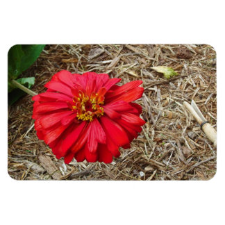 Big Red Flower Magnet