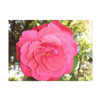 Big Red Rose Close-up Canvas Print