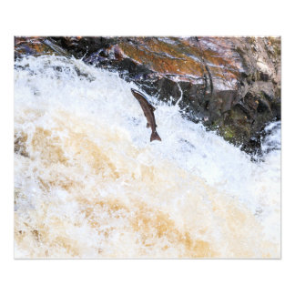 big salmon leaping up the waterfall photo print