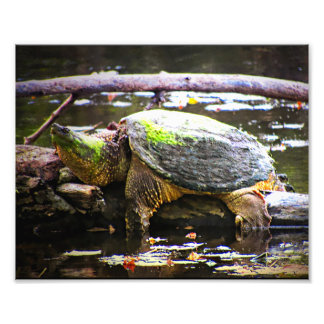Big Snapper Photographic Print
