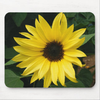 Big Sunflower Mouse Pad