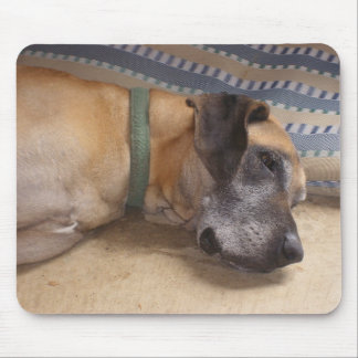 Big Sweet Great Dane Mouse Pad