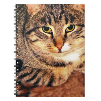 Big Tabby Cat 6 Note Book