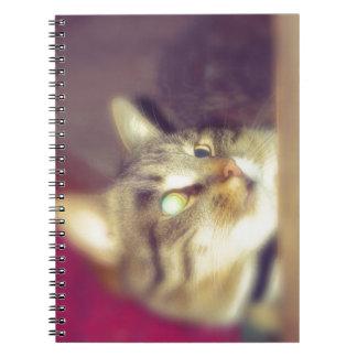 Big Tabby Cat 8 Notebook