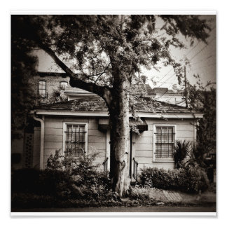 Big Tree/Little House Photo