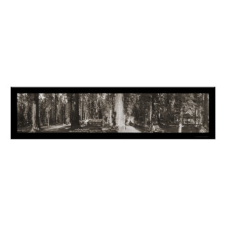 Big Tree Yosemite CA Photo 1911 Poster