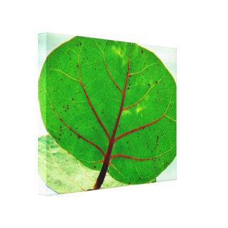 Big Tropical Leaf Canvas Print