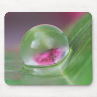 Big Water Drop on Leaf Mouse Pad