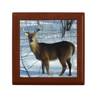 Big Whitetail Deer in Winter Wood Gift Box