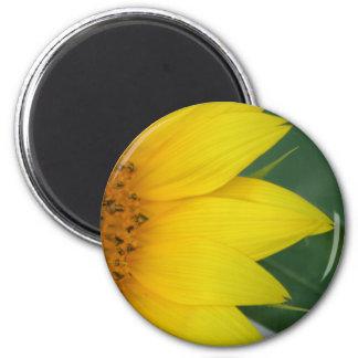 Big Yellow magnet