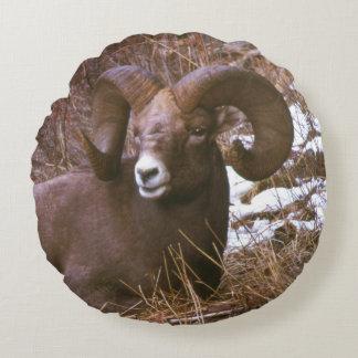 Bighorn ram round pillow