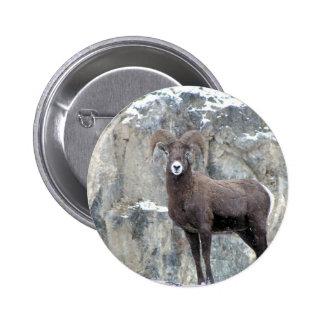 Bighorn Sheep 2 Inch Round Button