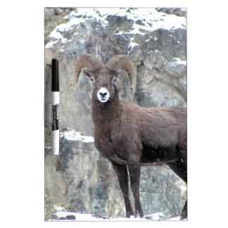 Bighorn Sheep Dry-Erase Board