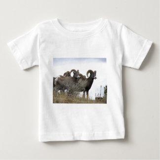Bighorn Sheep in BC Canada Baby T-Shirt