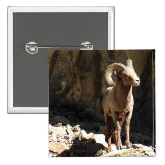 Bighorn Sheep Ram near rocks in Colorado. 2 Inch Square Button