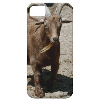Bill iPhone 5 Cover