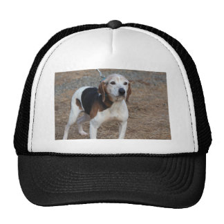 Billy Dog Trucker Hat