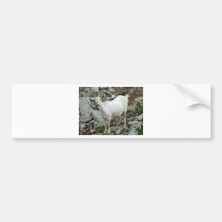 Billy Goat Bumper Sticker