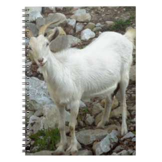 Billy Goat Notebook