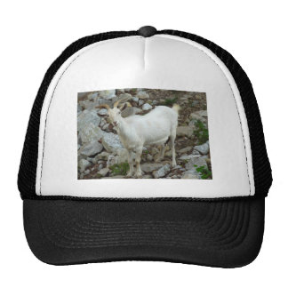 Billy Goat Trucker Hat