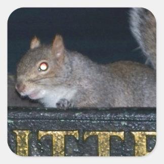 Bin-raid! Cheeky squirrel Square Sticker