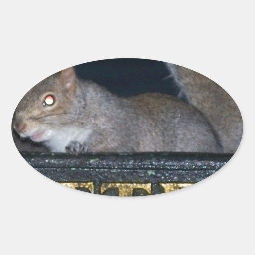Bin-raid! Cheeky squirrel Sticker