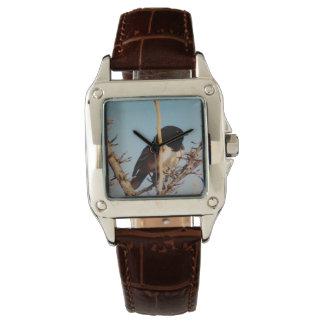 Bingham Bird Watch