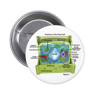 Biology 2 Inch Round Button