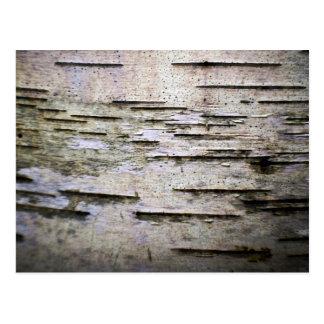 birch bark 1 postcard