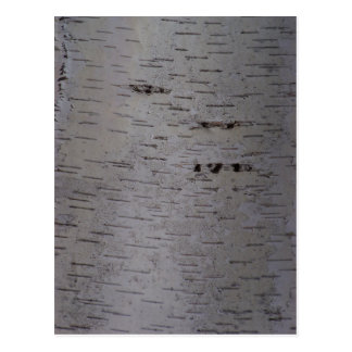 Birch Bark Postcard