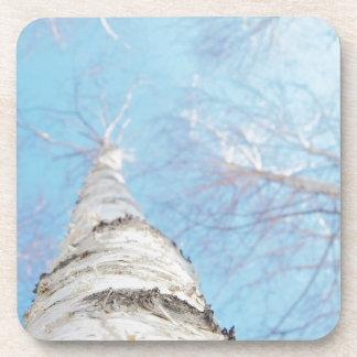 birch coaster