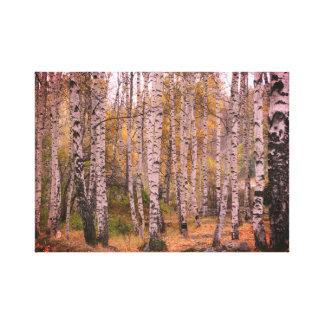 Birch Forrest Autumn Photo Single Canvas Print