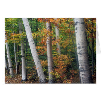 Birch Grove White Mountains Card